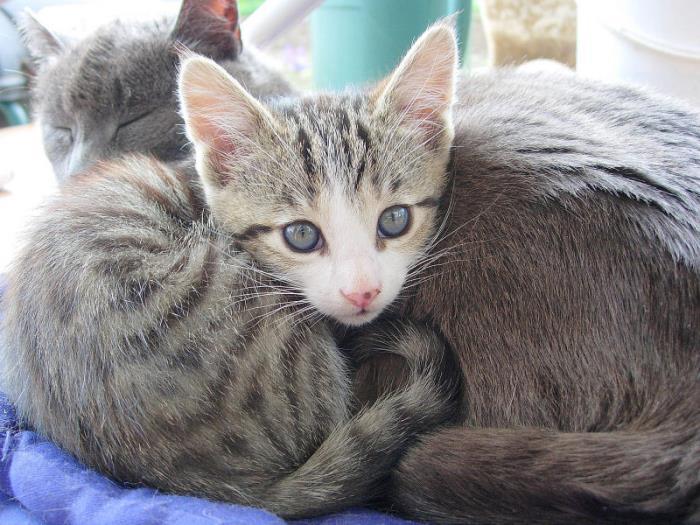 Kittens opvoeden